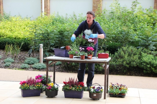 Royal Windsor Gardens return to give Autumn Potting Advice